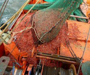 Preocupa la pesca indiscriminada en el mar argentino
