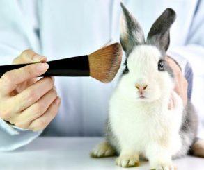 Piden prohibir la comercialización de productos testeados en animales
