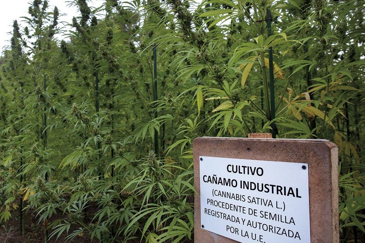 El Gobierno presenta proyecto de ley para regularizar el desarrollo de la industria del cannabis