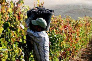 Diputados prevé aprobar el régimen previsional para viñateros, aunque todavía no será ley
