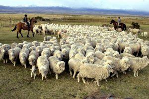 La ley ovina será sancionada en Diputados tras varios meses en el olvido